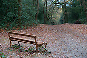 Autumn scene of fall leaves and a quiet bench in Sutton Park in Sutton Coldfield, Birmingham, United Kingdom. (photo by Mike Kemp/In PIctures via Getty Images)