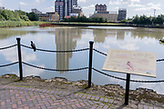 A pigeon sits on a chain barrier alongside an information board describing the many species of avian wildlife at East India Dock Basin at Learmouth, on 11th August 2021, in London, England.