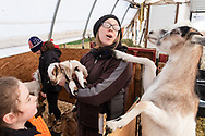 A goat tries to get the attention of Cara at while the holds one of the babies during a tour at Edgwick Farm in Cornwall, N.Y., on Jan. 19, 2020.