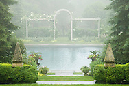 ROSE ARBOR WITH SPRUCE IN MORNING HAZE