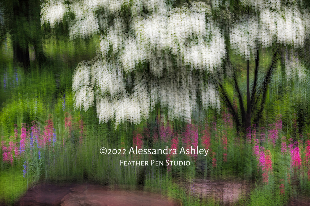 White dogwood in full bloom with spring foliage and flowers in woodland garden and pond setting. In-camera multiple-exposure technique for impressionistic rendering.