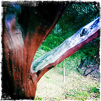 25 February 2012: Cade winery in Howell Mountain, Napa, California.  iPhone Stock Photo
