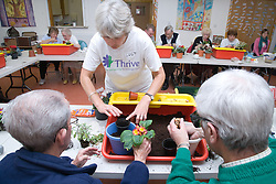 Class leader helping visually impaired men plant a primrose in a Thrive gardening workshop visiting the NRSB,  The use of yellow and red boxes help visually impaired people such as those with macular degeneration,