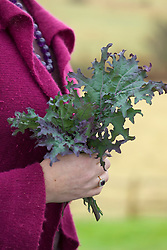 Sarah holding Kale 'Red Russian'