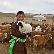 Mongolia. Cashmere goats. nomads, cattle breeders in the countryside near Lun, ,  Lun -    /   chevres a cachemire.  eleveurs nomades dans la steppe pres de Lun;   lun - Mongolie