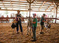 4H Fair at the Belmont Fairgrounds.  (Karen Bobotas Photographer)