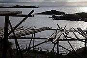 Silhouette of a bird on empty stockfish drying racks in Å, Lofoten Islands, Norway.