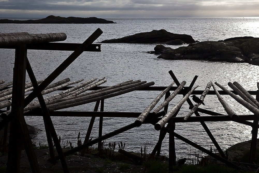 Silhouette of a bird on empty stockfish drying racks in Å, Lofoten Islands, Norway.
