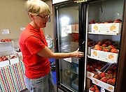 Sherry Chase of Mills Apple Farms shows peaches stored in a cooler inside their store. The peaches are huge this year, largely due to the high rainfalls they've experienced at the Madison County-based orchard near Marine.