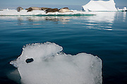 Leopard seals on an ice flow near Petermann Island, home to the southernmost breeding colony of gentoo penguins, located below the Lemaire channel, near the Antarctic peninsula.