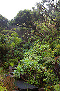 The monthly rain gague hike at the Pu'u Kukui Watershed Preserve, the largest privately held nature preserve in the state of Hawaii, owned by Maui Land and Pineapple