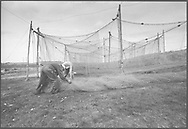 Salmon netters rolling up dried and repaired 'jumper' nets to be stored away for the winter at the end of the season at Kinnaber, Angus.<br /> Ref. Catching the Tide 54/00/05a (4th September 2000)<br /> <br /> The once-thriving Scottish salmon netting industry fell into decline in the 1970s and 1980s when the numbers of fish caught reduced due to environmental and economic reasons. In 2016, a three-year ban was imposed by the Scottish Government on the advice of scientists to try to boost dwindling stocks which anglers and conservationists blamed on netsmen.