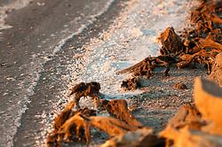 Il complesso produttivo delle saline è situato nel comune italiano di Margherita di Savoia (nome dato dagli abitanti in onore alla regina d'Italia che molto si adoperò nei confronti dei salinieri) nella provincia di Barletta-Andria-Trani in Puglia. Sono le più grandi d'Europa e le seconde nel mondo, in grado di produrre circa la metà del sale marino nazionale (500.000 di tonnellate annue).All'interno dei suoi bacini si sono insediate popolazioni di uccelli migratori e non, divenuti stanziali quali il fenicottero rosa, airone cenerino, garzetta, avocetta, cavaliere d'Italia, chiurlo, chiurlotello, fischione, volpoca..Particolare della sponda di un bacino con rami secchi in primo piano