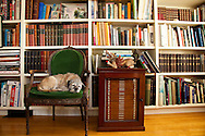 """The Portland, Oregon home of Wendy Burden, author of  the memoir, Dead End Gene Pool. The Dining room where Ms. Burden works is filled with a marvelous collection of books. Ms. Burden's dog, """"Spit,"""" naps in the dining room."""