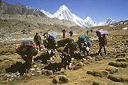 Trekking with yaks in Solo Khumbu