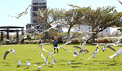 South Africa - Cape Town - 01 October 2020 - Kai Von Ribbeck (4) having fun chasing birds at Greenpoint Park with his family. Picture: Brendan Magaar/African News Agency(ANA)