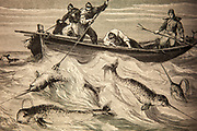 Hunting narhwal from long boat in Arctic waters