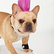 20130103 Costume Dogs