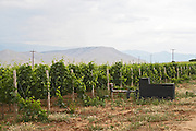 Vineyard. With irrigation pump. Alpha Estate Winery, Amyndeon, Macedonia, Greece