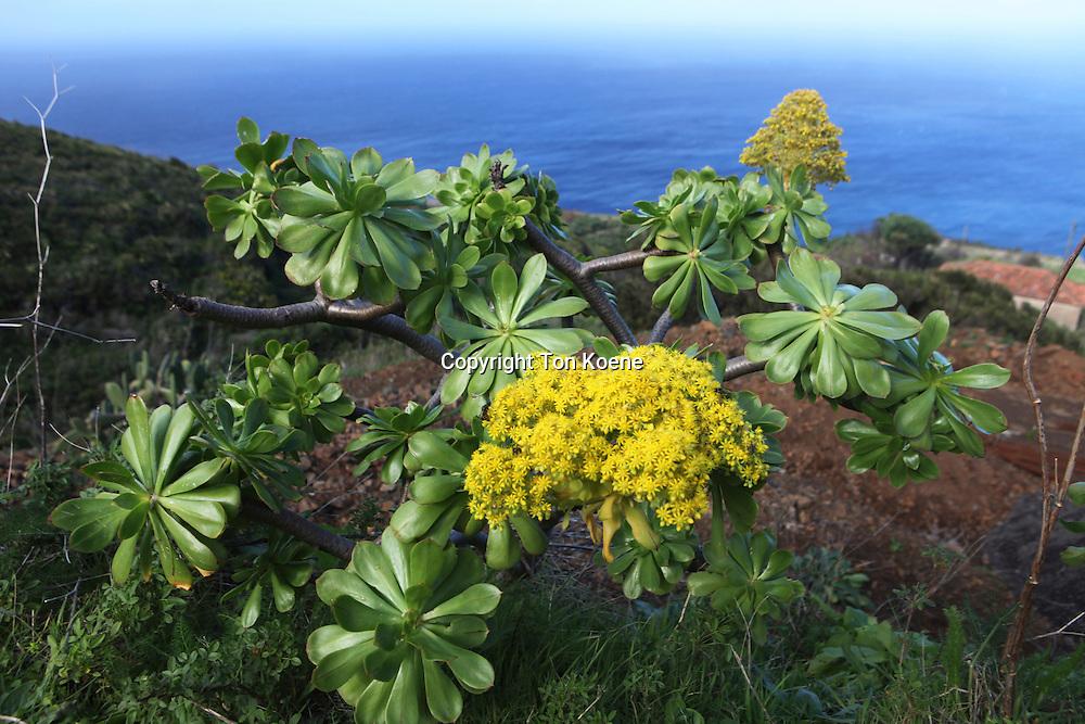 vegetation on La Palma