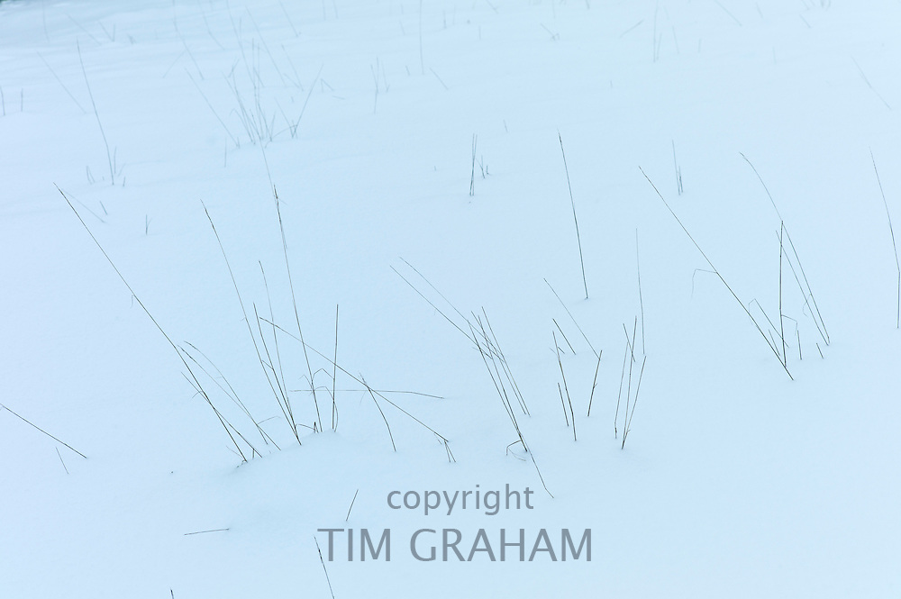 Grass on snowy hillside in The Cotswolds, UK