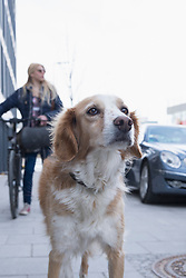 Close-up of mongrel dog with teenage girl standing in the background, Munich, Bavaria, Germany