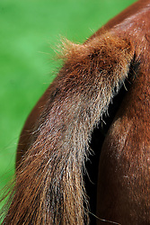 Tail<br /> © Dirk Caremans
