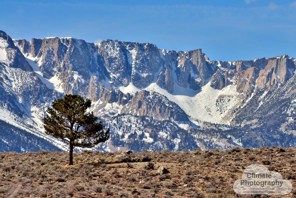 Eastern Sierra range and tree, Crowley Lake, CA.