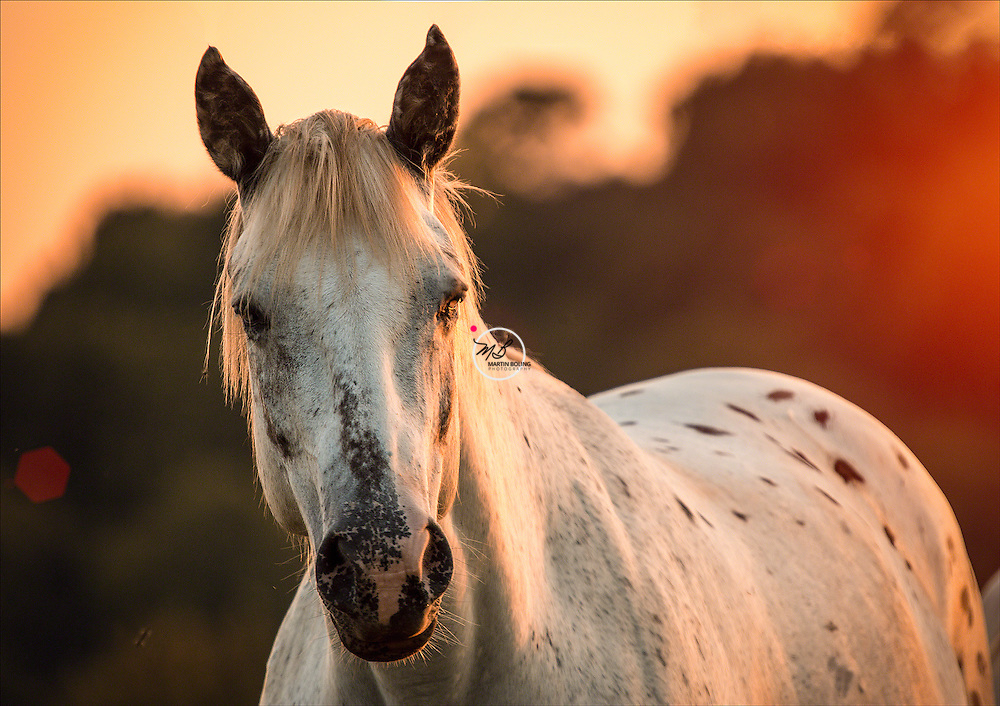 White Horse sunset