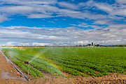 Crops being irrigated in Kern County, San Joaquin Valley, California, USA