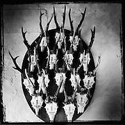 Deer skulls hang in the Ronneburg Castle.