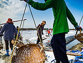 2017 Salt Harvest