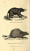 Porcupine from General zoology, or, Systematic natural history Vol 2 Mammalia, by Shaw, George, 1751-1813; Stephens, James Francis, 1792-1853; Heath, Charles, 1785-1848, engraver; Griffith, Mrs., engraver; Chappelow. Copperplate Printed in London in 1801 by G. Kearsley