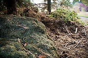 Compost piles sit behind the garden.