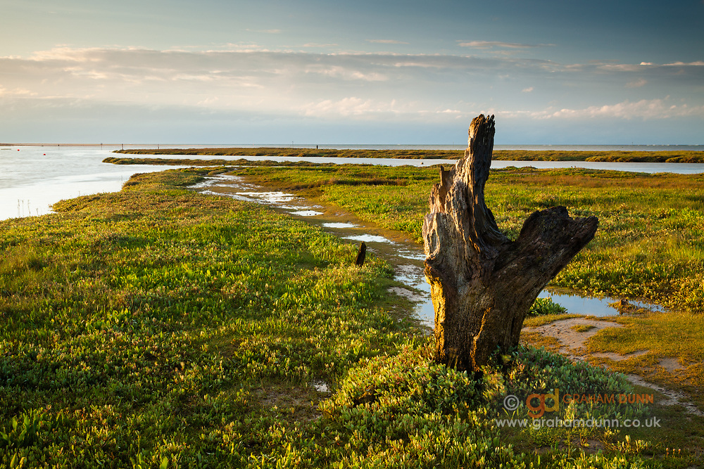 Evening light on one of Thornham Harbour's many fascinating wooden posts. North Norfolk, East Anglia.