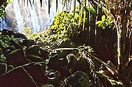 wairua falls whangarei, available in this years beachlife calendar