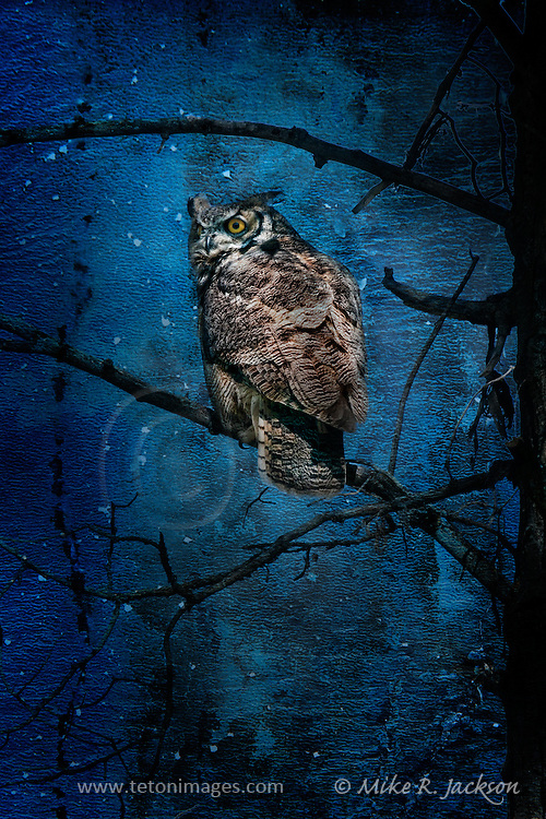 Artistic photography by Mike R. Jackson of a great horned owl in Grand Teton National Park. Textured effects added.