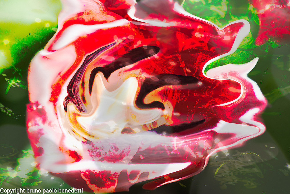 fluid floating abstract shapes in white, red and black colors with shades