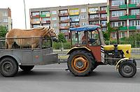 22.05.2008 Suwalki osiedle Polnoc n/z kon przewozony na przyczepie do traktora fot Michal Kosc / AGENCJA WSCHOD