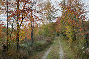 Path through orange fall color leaves. Cadillac Heritage Nature Study Area, William Mitchell State Park, Cadillac, Michigan, USA. Walk the pleasant 2.5-mile Heritage Nature Trail on boardwalks and packed limestone starting from Carl T. Johnson Hunting and Fishing Center, through old-growth hardwood forest then around an old dike system which retains rich wetlands.