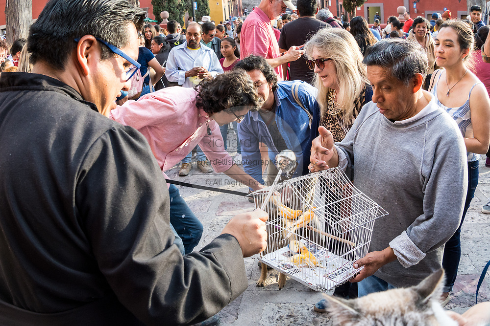 A Roman Catholic priest blesses a bird during the annual blessing of the animals on the feast day of San Antonio Abad at Oratorio de San Felipe Neri church January 17, 2020 in the historic center of San Miguel de Allende, Guanajuato, Mexico.