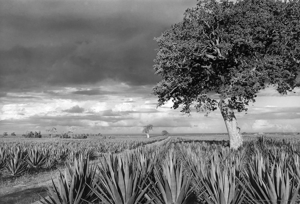 Sisal Rope, Tanga, Tanganyika (now Tanzania), Africa, 1937