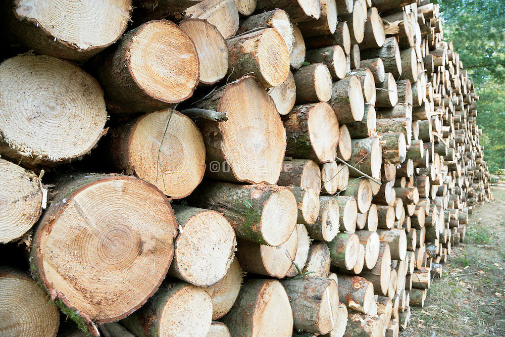 stacked cut logs