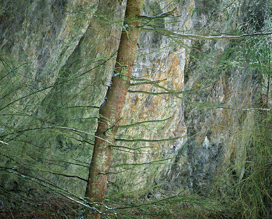 fir tree and rock wall abstract, Anacortes, Washington State