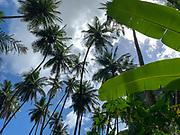 Omoa, Fatu Hiva, Marquesas, French Polynesia, South Pacific