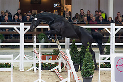 058, Mr Henri Dale van de Riethoeve<br /> BWP Hengsten keuring Koningshooikt 2015<br /> © Hippo Foto - Dirk Caremans<br /> 21/01/16