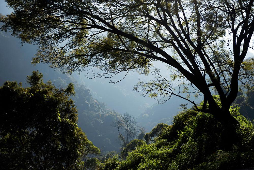 Nilgiri Hills of the Western Ghats. Near Ooty.