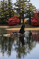 59. Motsuji Garden 毛越寺 - The pond at Motsuji is called Oizumi-ga-Ike.  The pond garden at Motsuji reflects 12th century ideas about garden design as described in the Sakutei-kei, Japan's oldest manual on garden design. The Sakutei-kei explains how elements such as beaches, rocky coastline, bridges, mountains, streams and stones protruding from the lake's surface should be used in the composition of a garden. The  beauty of the pond has remained unchanged for eight centuries, blending into the surrounding nature and one of the few remaining Pure Land gardens that have survived in Japan. Pure Land gardens were designed to recreate the concept of Buddhist paradise. Spirituality was built into the very foundations of the place, designed to elevate the mind as well as entertain the eye.  Motsuji is considered one of the pinnacles of Japanese gardening art and design and unique in its austere perfection.