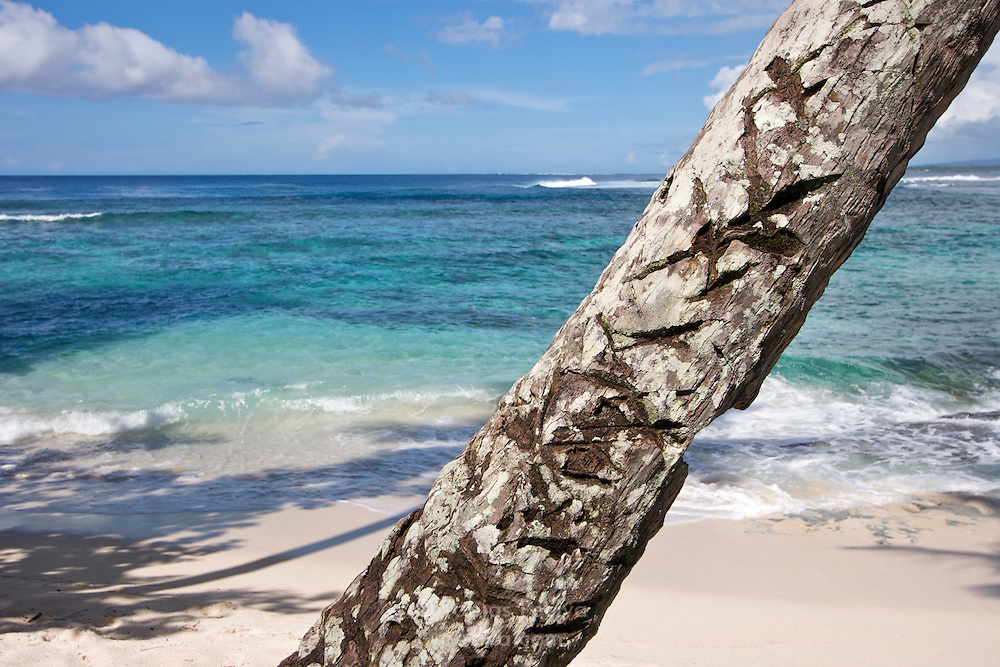 Diagonal trunk of a palm tree on Savaii, Western Samoa.