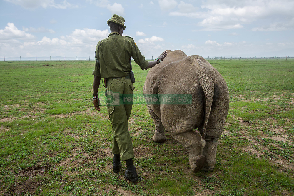 March 20, 2018 - Nanyuki, Kenya - Caretaker with northern white rhino female...With the death of Sudan, there are only two remaining northern white rhino alive. Called Najin and Fatu, they spend their lives living in protected area of Ol Pejeta Conservancy, where the 'Caretakers' sort of armed nature rangers are protecting them. (Credit Image: © Jan Husar/SOPA Images via ZUMA Wire)